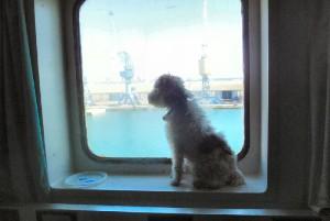 Ma chienne Windy